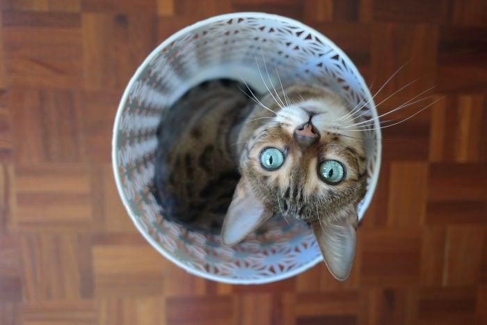 gato bote de basura