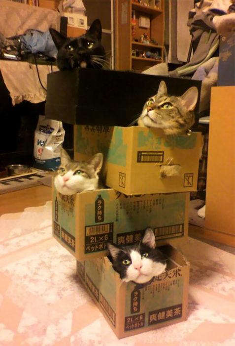 gatos en cajas