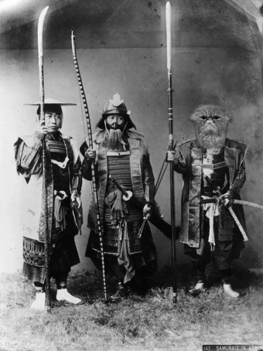 samurai gato