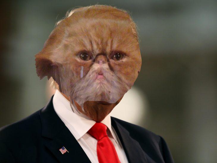 gato donald trump