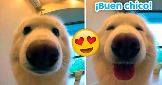 """Cover Imágenes de animalitos antes y después de decirles """"Buen chico"""""""
