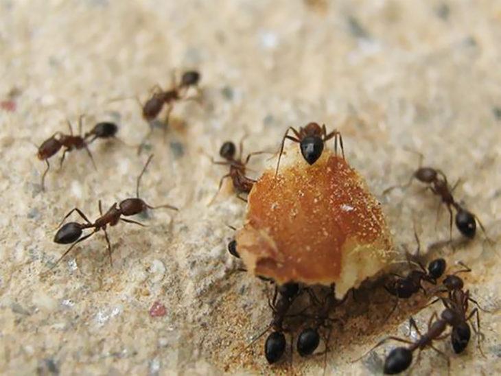 hormigas llevando las migas del pan
