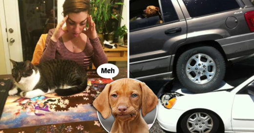 Cover Animales a los que la vida no les interesa un comino
