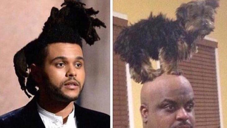 comparativa del peinado de Weeknd con un perro