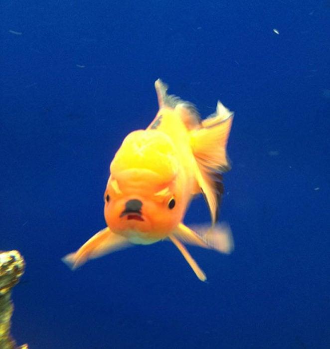 pez molesto hitler