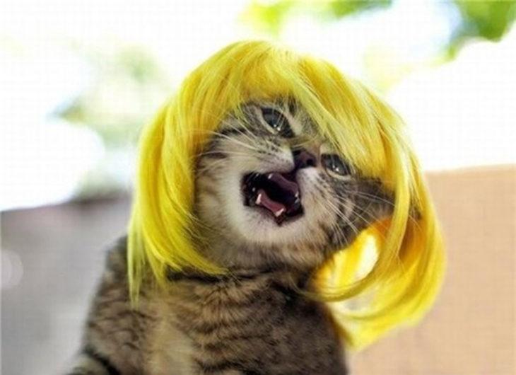 gato peluca rubia molesto