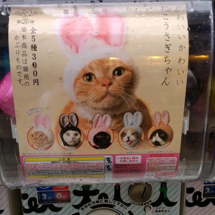 orejitas para gato japón