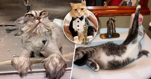 Cover Gatos tan dramáticos que parecen actores de telenovelas