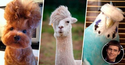 Cover Animalitos que tienen estilista personal