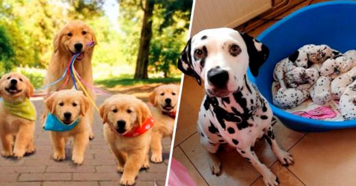 Cover Estas 17 adorables padres posando junto a sus cachorros te robaran el corazón