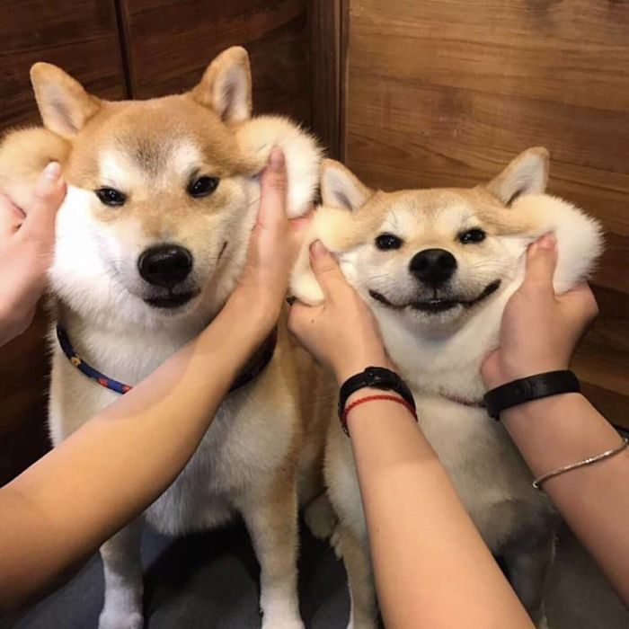 perros cachetones