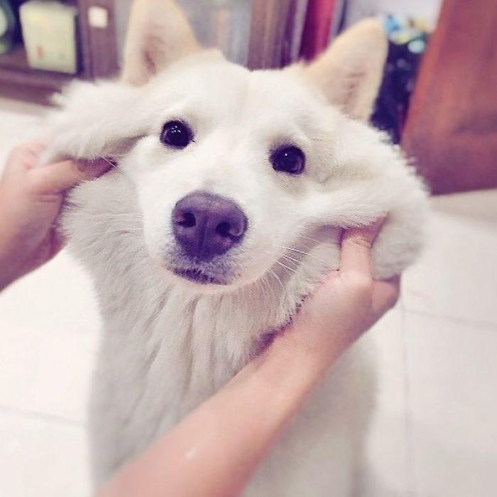 perro blanco confundido