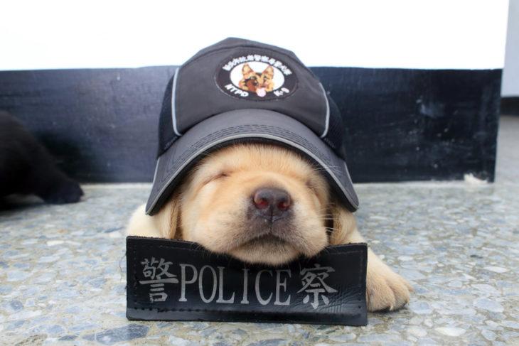 cachorrito dormido policía