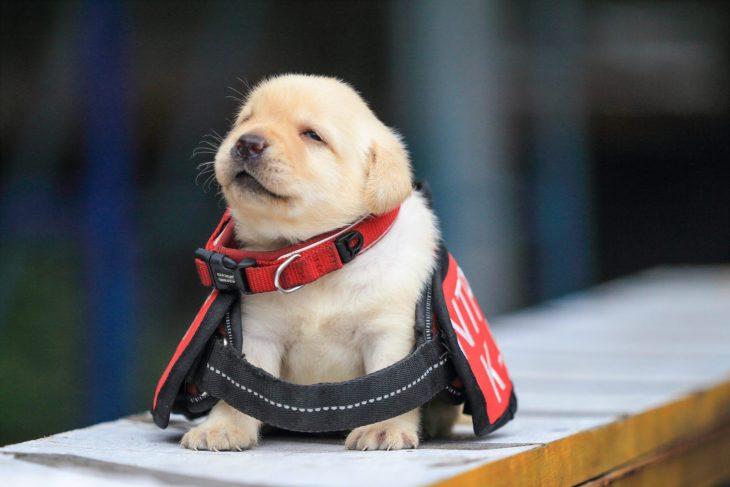 perrito policía cachorro