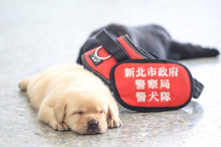 perrito dormido soñando
