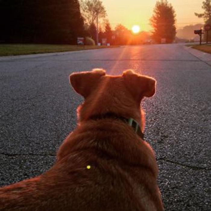 perro horizonte
