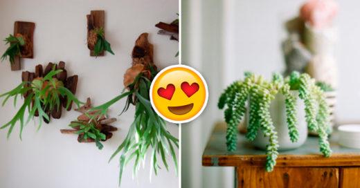 Cover Exóticas plantas para decoración interior que amarás en tu departamento