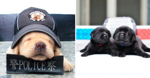 Cover Así es como se preparan los cachorritos para convertirse en oficiales de policía