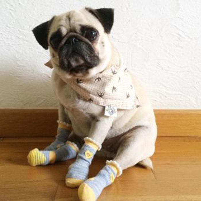 pug calcetines tierno