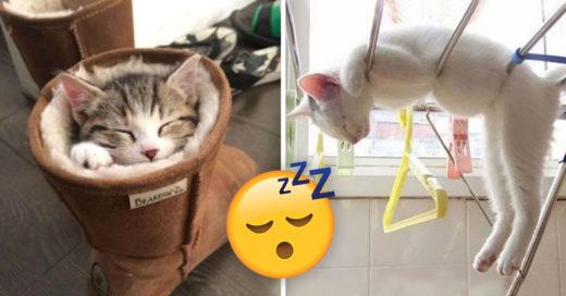 Cover gatos que literalmente pueden dormir en cualquier lugar