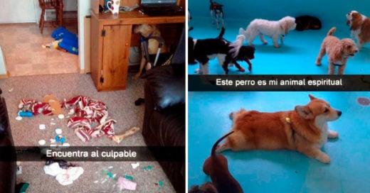 Cover Divertidos perros que están arrasando en Snapchat
