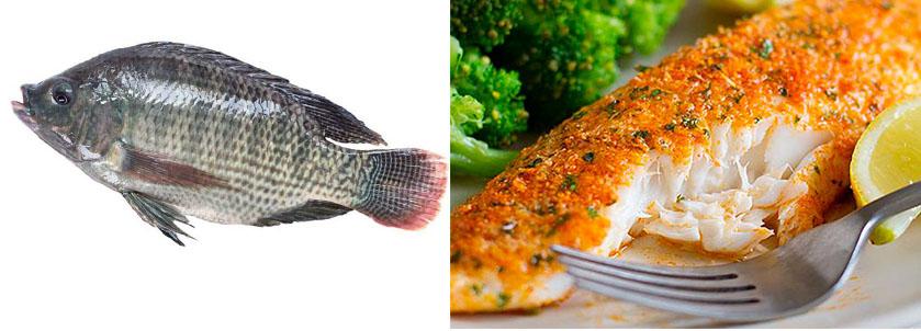 9 tipos de pescado que es preferible que nunca comas for En cuanto tiempo se cosecha la tilapia