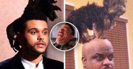 Cover Memes que demuestran porque The Weeknd tiene el mejor peinado