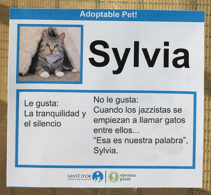 descripción gatito en adopción sylvia