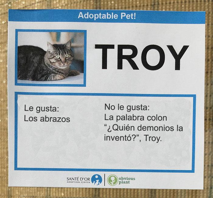 troy gatito descripción gatito en adopción