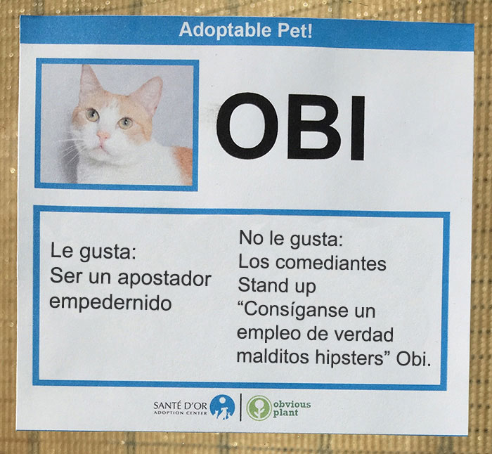 descripción gatito en adopción obi