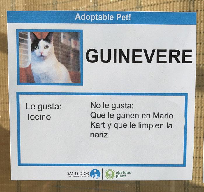 tocino descripción gatito en adopción