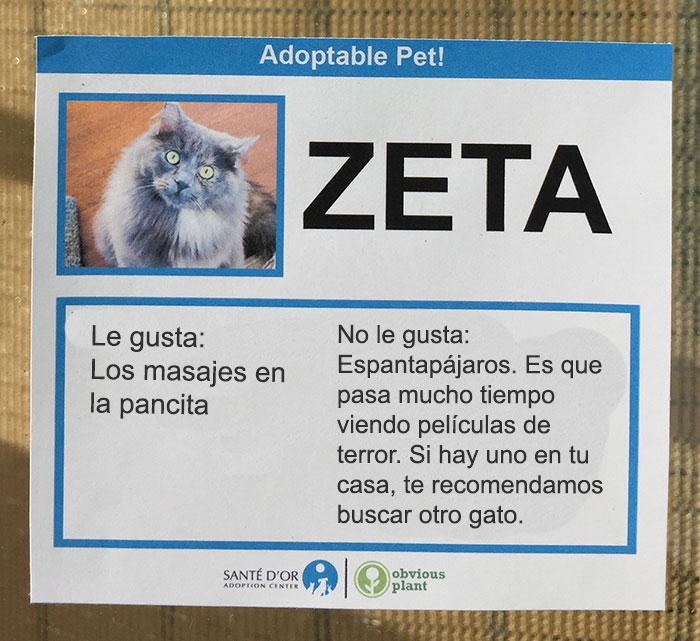 descripción gatito en adopción zeta