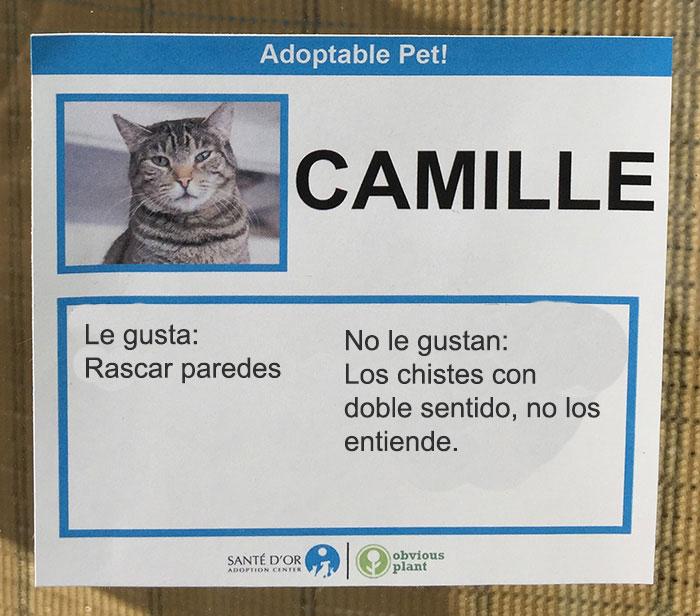 camille descripción gatito en adopción