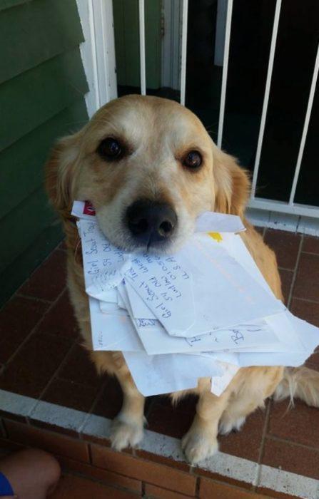 Australia perros reciben cartas