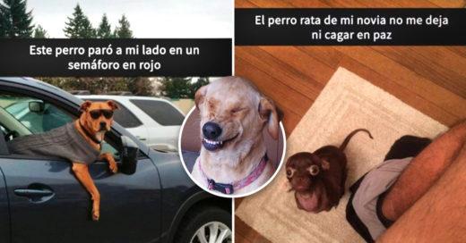 Cover Morirás de risa con estos 17 Snapchats de perros
