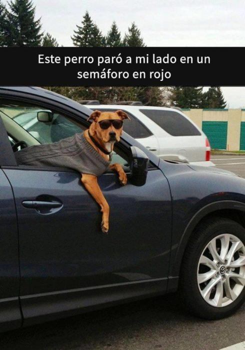 Snaps perros - perro en la calle
