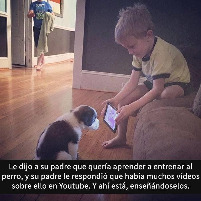 Snaps perros - como entrenar a tu perro