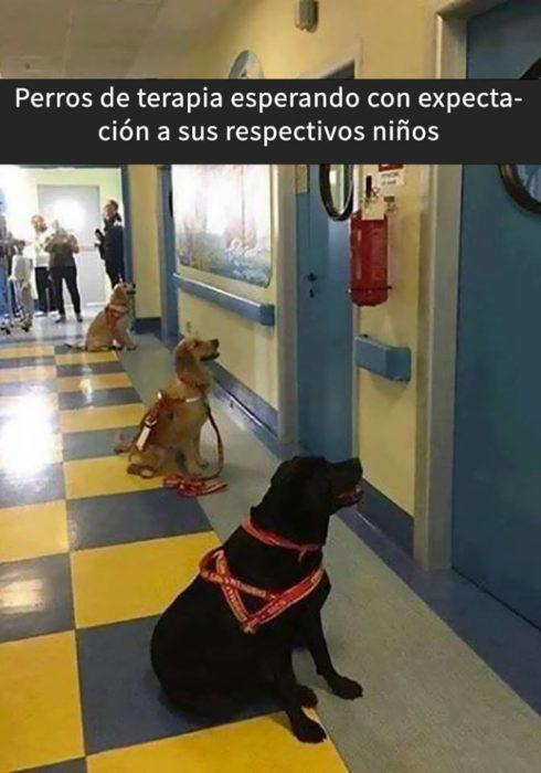 Snaps perros - esperando a sus dueños de cirugía