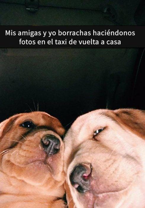 Snaps perros - tu amiga y tú borrachas