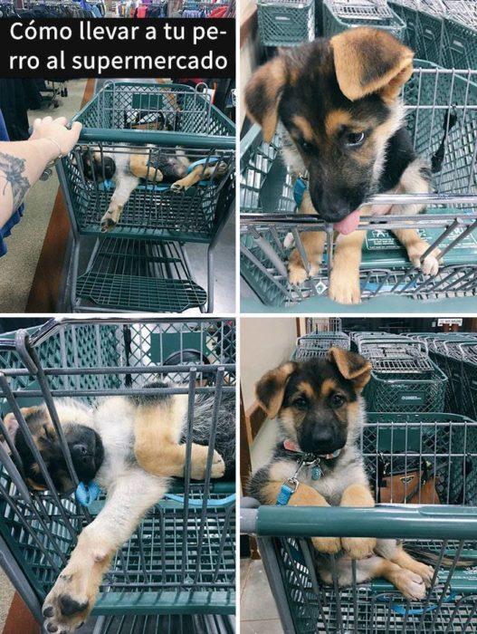 Snaps perros - como llevar a un perro al supermercado