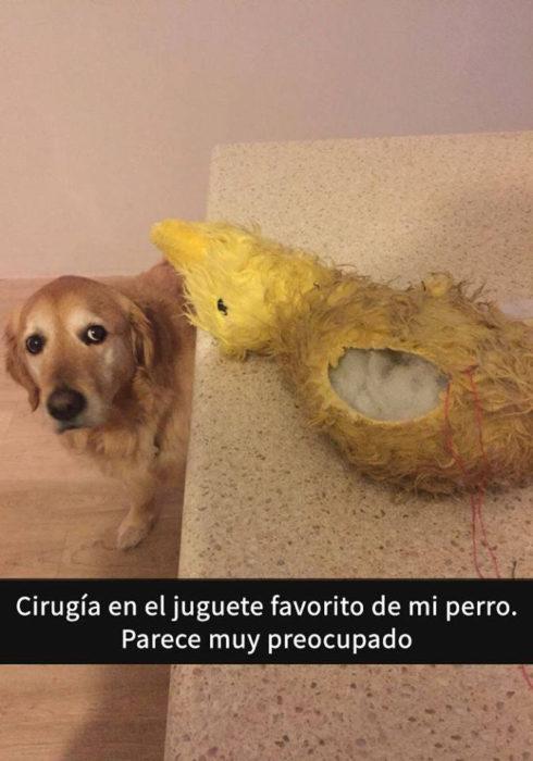 Snaps perros - cirugía juguete