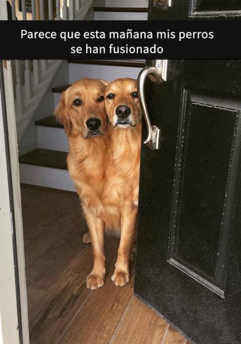 Snaps perros - perros fusionados