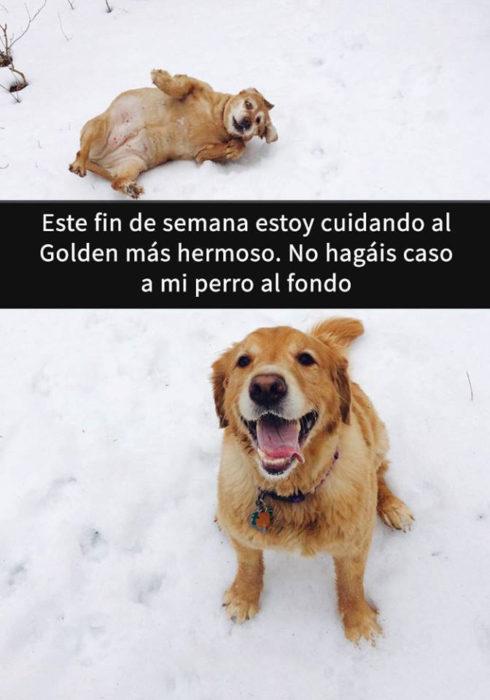 Snaps perros - labrador hermoso y mi perro atrás