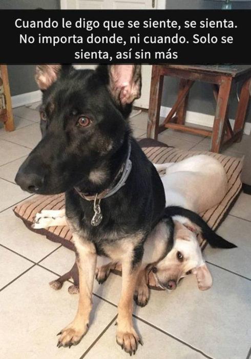 Snaps perros - se sienta donde sea