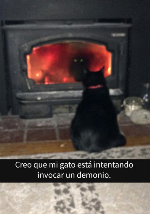 gato frente a chimenea