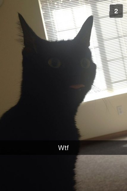 gato con la lengua de fuera