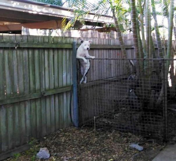 perro del vecino