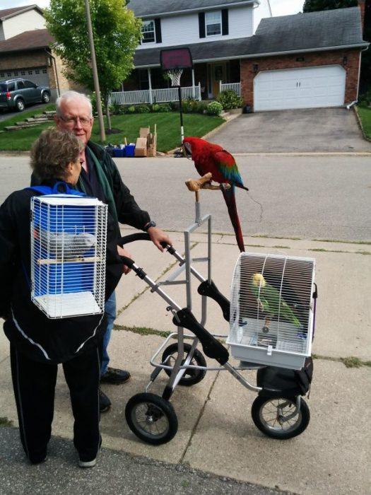 Vecinos sacan a pasear aves