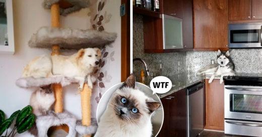 Cover 'gatos' que no están enterados que son perros
