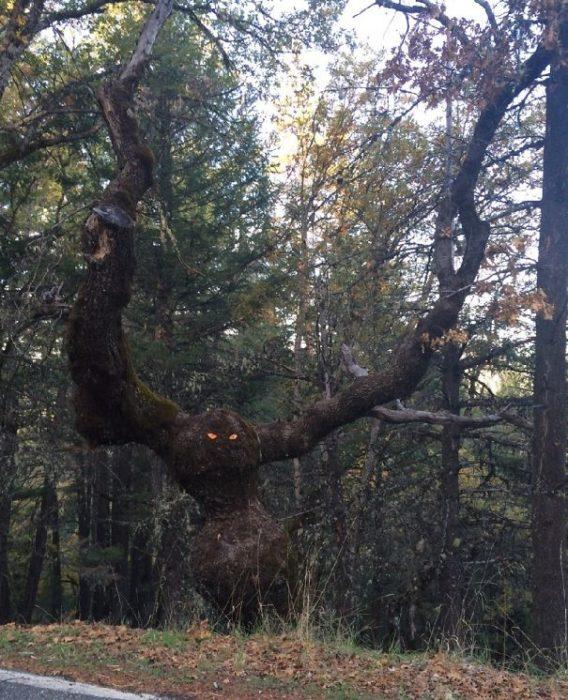 bosque árbol con vida